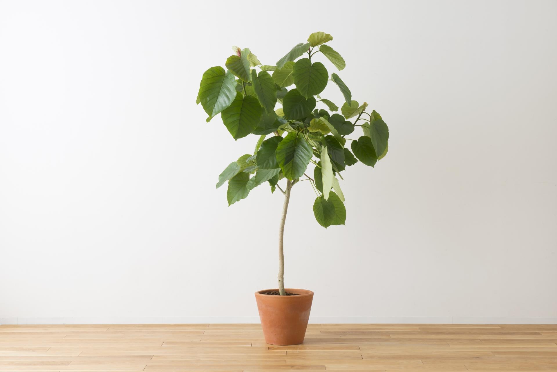 リノベ 植物 グリーン